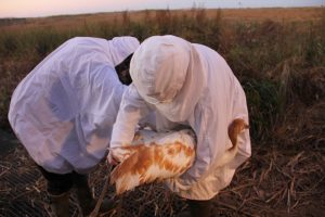 Ethics in the Field: How far should we go to bring back lost species?