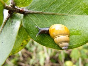 A World in a Shell: Snail Stories for a Time of Extinctions