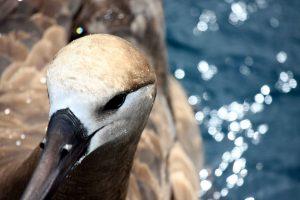 Reflection on the anthropocene