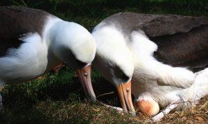 Albatross, plastic and the undoing of generations